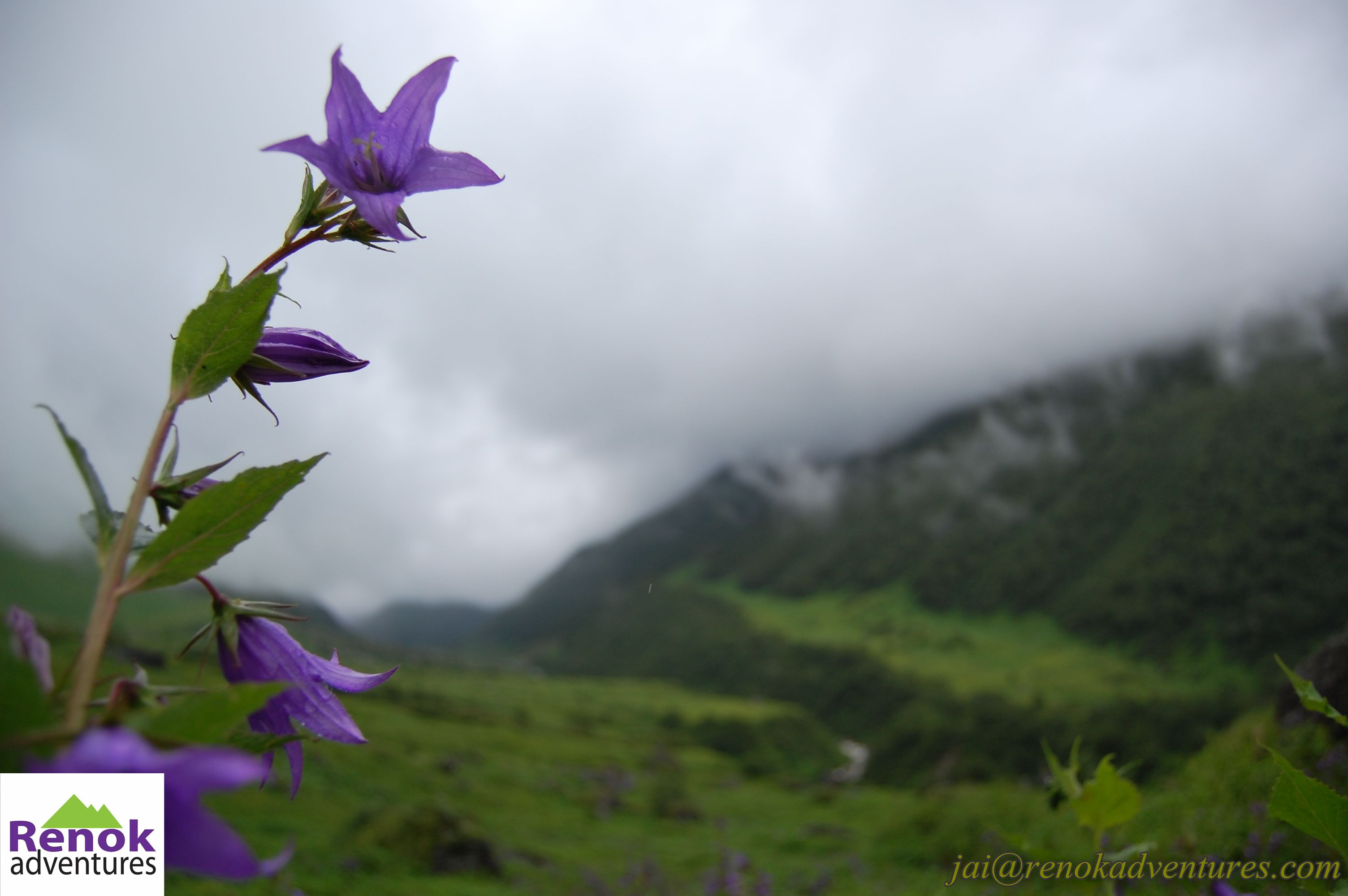Valley of Flowers Trek 2016